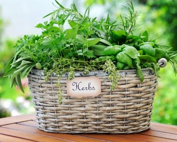 2020-04 basket-with-herbs-PXR8D3B.jpg